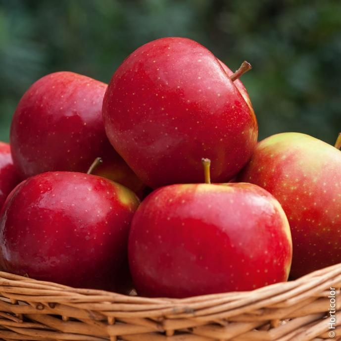 Kaki fuyu arbres fruitiers meilland richardier - Arbre a kaki nom ...