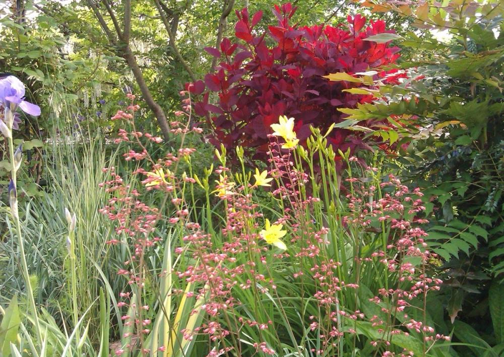 Envie d\'un jardin fleuri en automne ?