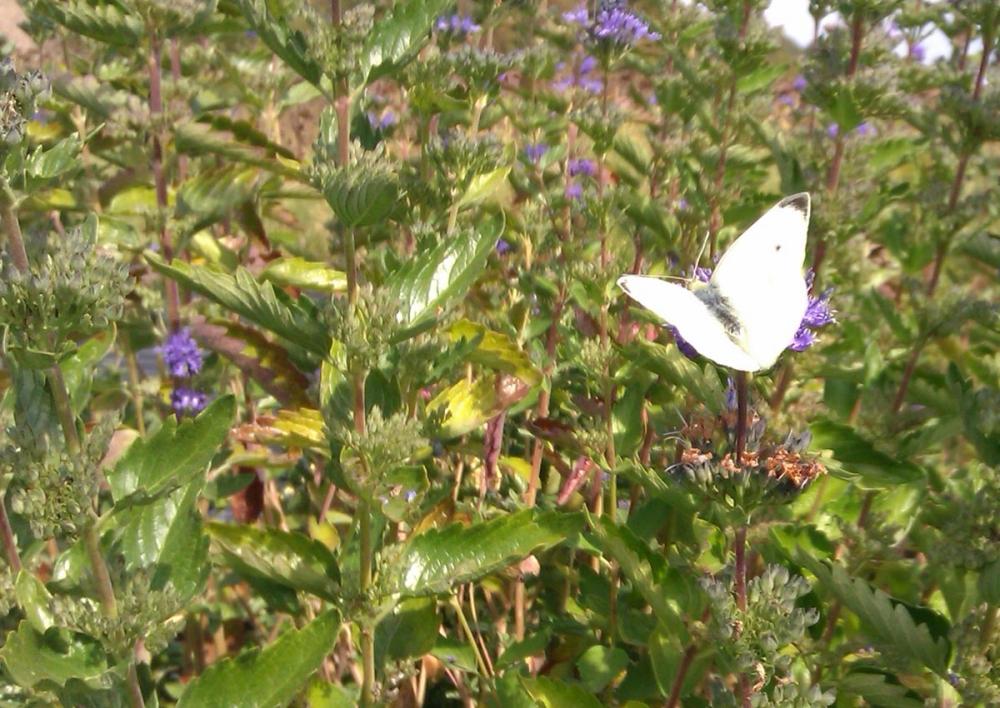 Comment cr er un jardin pour attirer papillons et oiseaux - Comment attirer les oiseaux dans son jardin ...