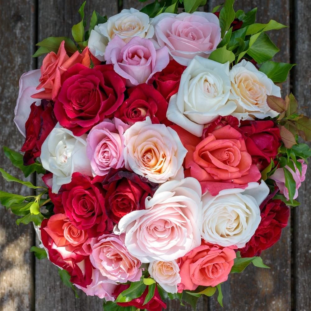 Comment Faire Un Bouquet De Roses connaître les familles de rosier : conseils pour bien s