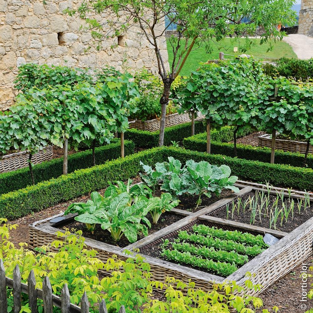 Le Jardin Potager En Janvier légume d'hiver
