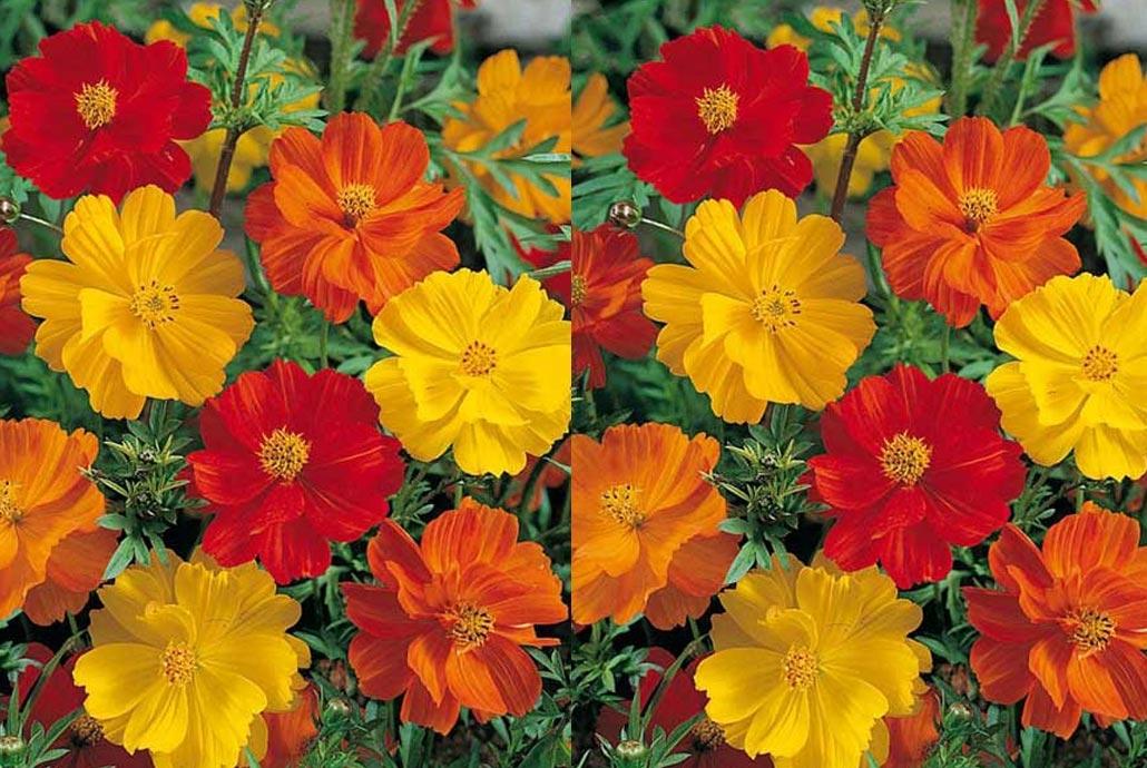 quelles plantes choisir pour avoir un jardin orange