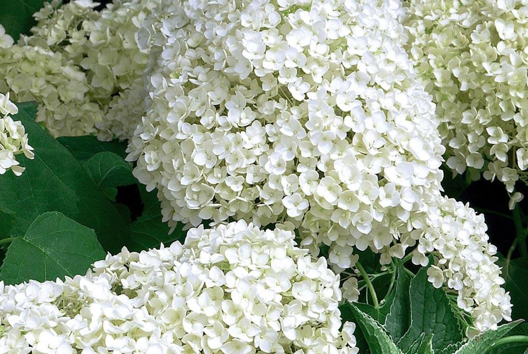 Couleurs tendances jardin noir et blanc for Jardin noir et blanc